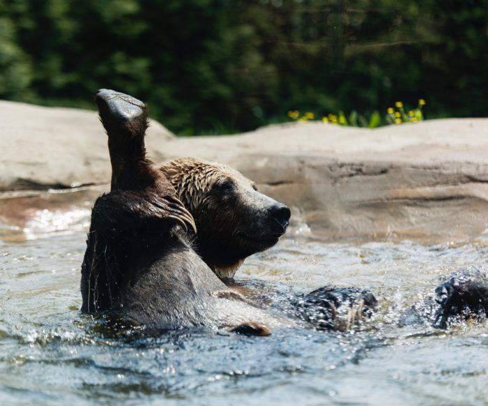 bienfaits baignade rivière