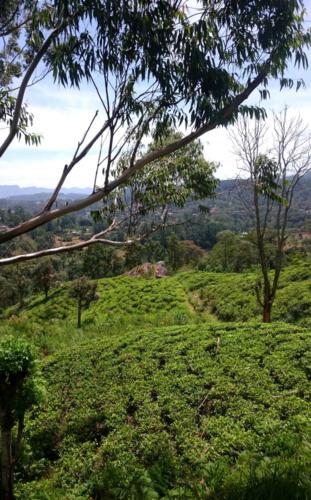 Beauté d'une plantation en biodynamie